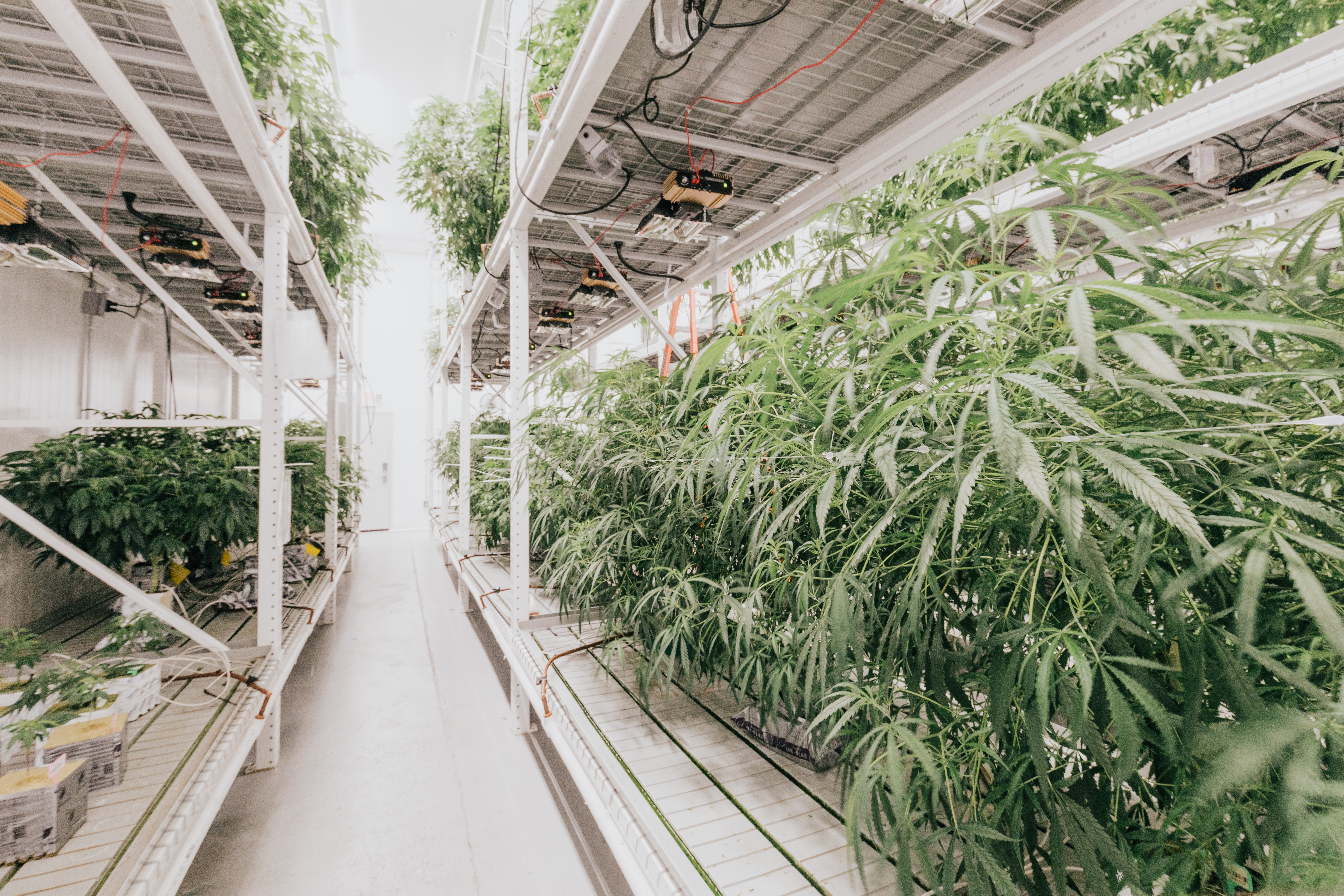 Vantage Builders Completes State-of-the-Art Cannabis Cultivation Facility For Sanctuary Medicinals in Littleton, Mass.